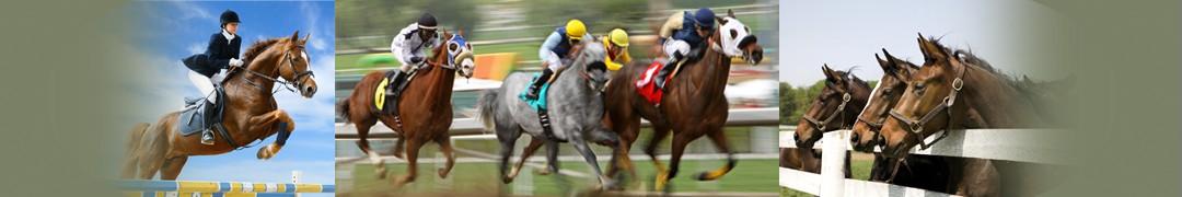 HorsesStrip